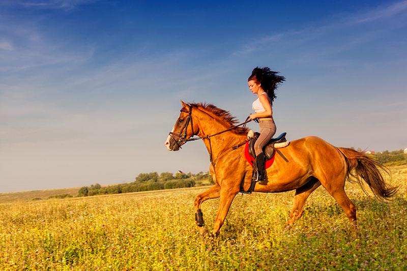 цены на Верховая езда c фотосессией для двоих  в интернет-магазинах