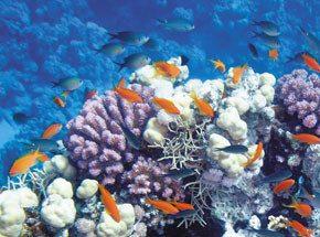 Океанариум для семьиПодарочные сертификаты<br>Считайте, что вы спустились в глубины Тихого океана - настоящие кораллы, крупные глубоководные рыбы и яркие стайки тропических малышей окружат вас в океанариуме. Через иллюминаторы вы сможете понаблюдать даже за страшными морскими хищниками, например, зубастой акулой.<br>