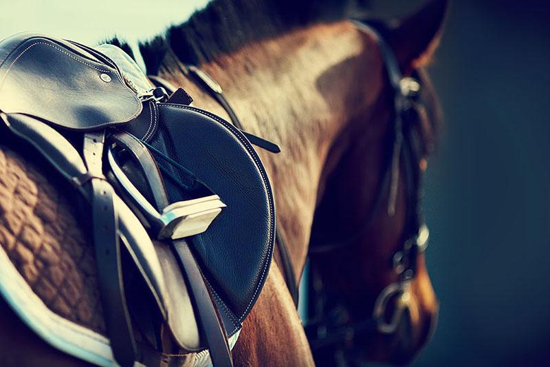 Верховая езда в Кремлевской школе для двоихПодарочные сертификаты<br>Урок верховой езды пройдет на крытом или открытом манеже. Опытный тренер научить вас седлать лошадь и управляться с ней.<br>Общение с животным подарит незабываемые эмоции. Надо будет обязательно повторить!<br>