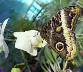 Сад бабочек сад бабочек